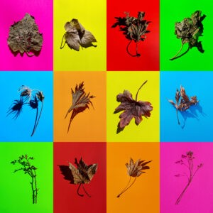 Untitled, Plant Study #1